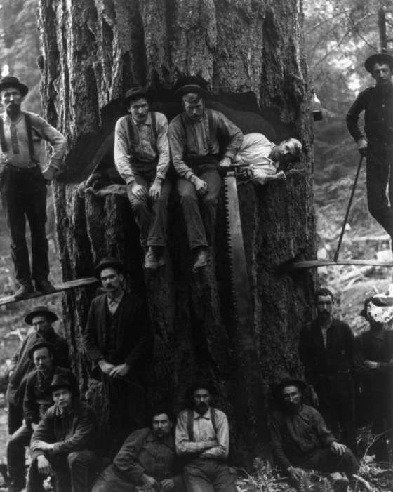 Американські лісоруби кінця XIX - початку XX століття (15 фото)