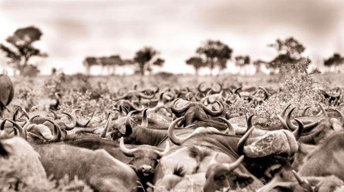 Знімки Кріса Реншоу, кращого фотографа Африки цього року (15 фото)