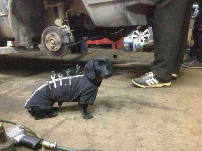 В автосервісі зявився новий співробітник (4 фото)