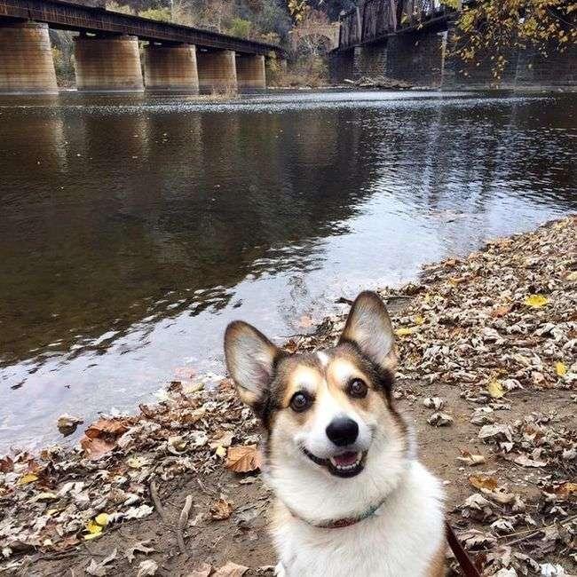 Самі прикольні фотографії собак за 2015 рік (32 фото)