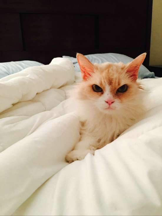 Котяча вдячність (3 фото)