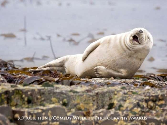 Кращі знімки премії «Смішна Дике Життя» (19 фото)