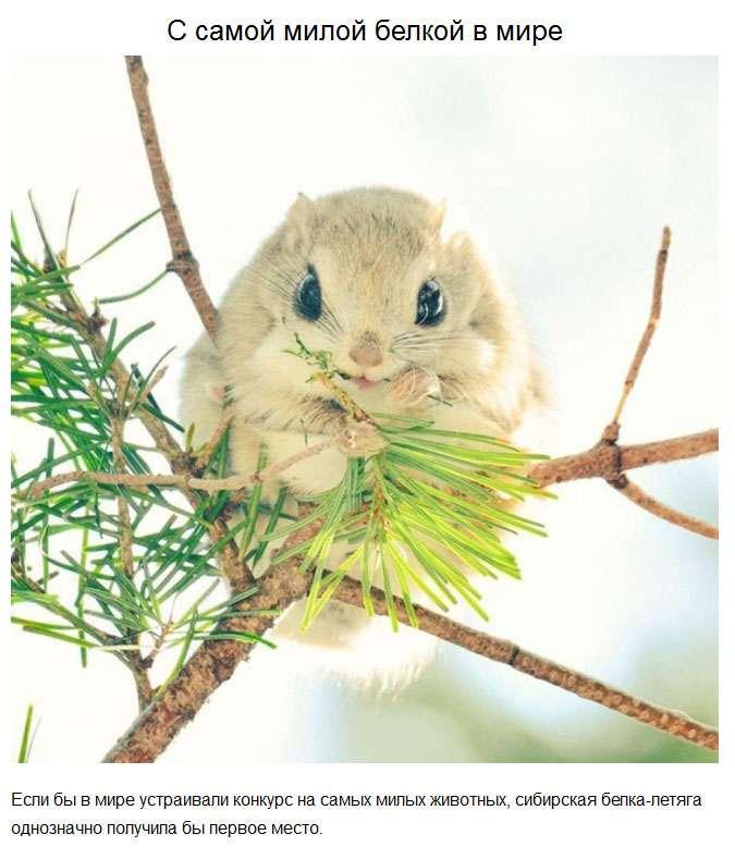 Милі тварини, які зробили цей рік трішки добрішим (20 фото)