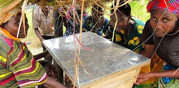 Захист полів африканських фермерів від набігів слонів (5 фото)