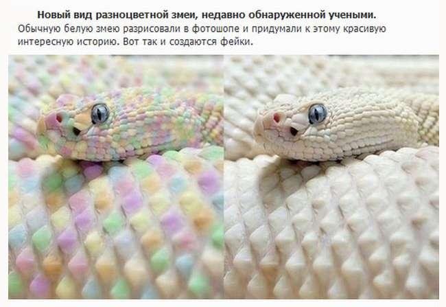 Вірусні фото, які опинилися фейками (12 фото)