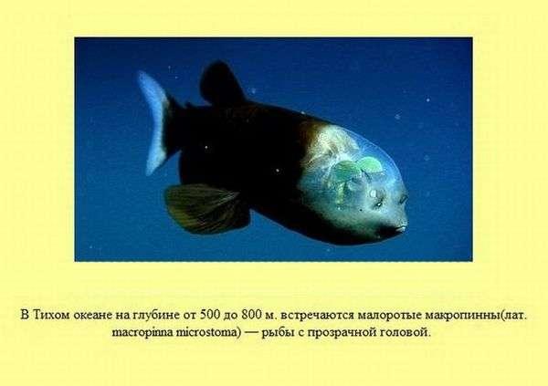 Цікаві факти про все на світі (30 картинка)