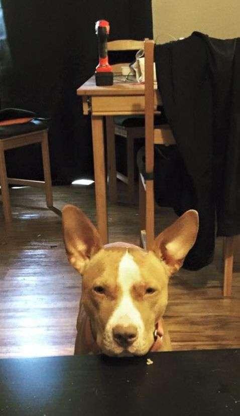 Незадоволений пес з чудовою мімікою (2 фото)