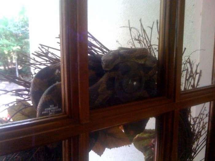 На порозі власного будинку чоловік був вкушений змією прямо в лисину (5 фото)