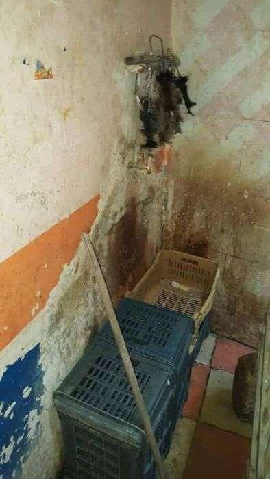 Жахи єгипетського заводу по розливу соку (15 фото)