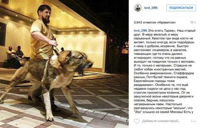 Спікер чеченського парламенту Магомед Даудов пригрозив опозиціонерам вівчаркою Кадирова (2 фото)