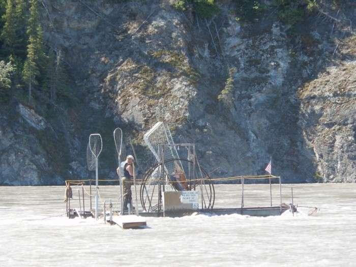 Як черпають рибу на Алясці (10 фото)