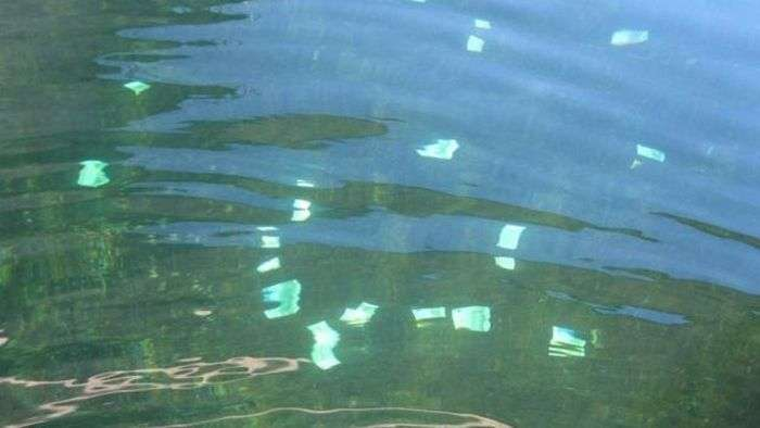 Житель Відня виловив з Дунаю 100 000 євро (7 фото)