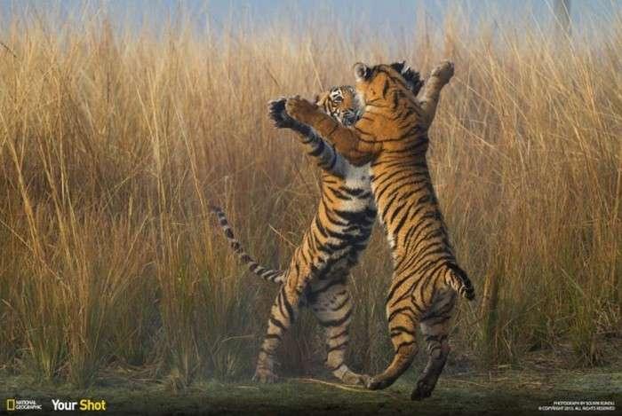 Кращі фотографії, надіслані в редакцію National Geographic, в цьому році (40 фото)