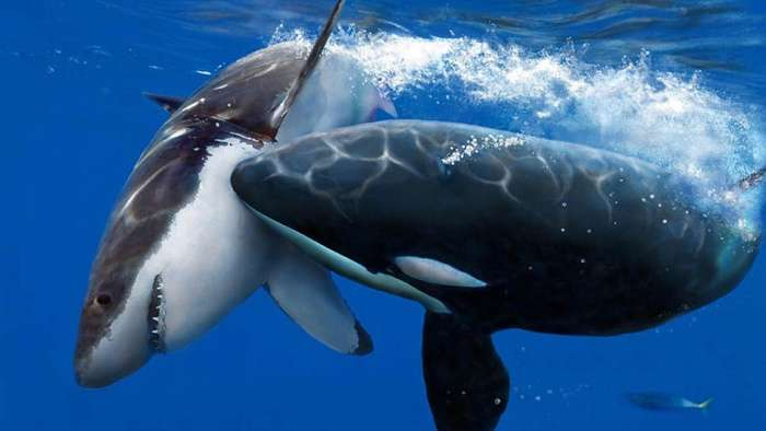Дивовижні факти про тварин (22 фото)