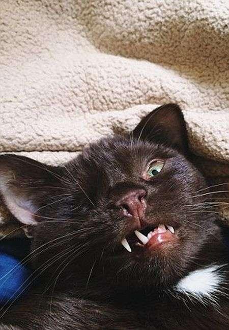 Одноокий кіт-пірат на прізвисько Уеслі - нова зірка соцмереж (6 фото)