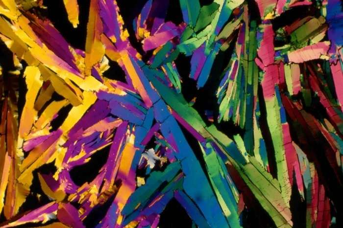 Дивовижні знімки, зроблені під мікроскопом (25 фото)