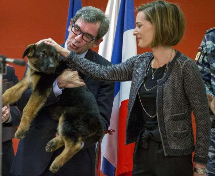 Чарівний щеня Добриня, подарований російськими поліцейськими французьким колегам (5 фото)