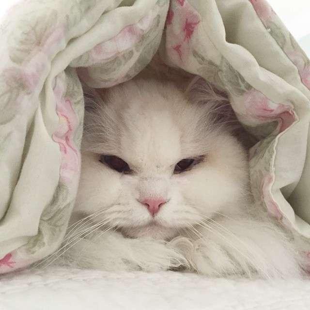 Що зробила любов і турбота з хворим, бездомним кошеням (11 фото)