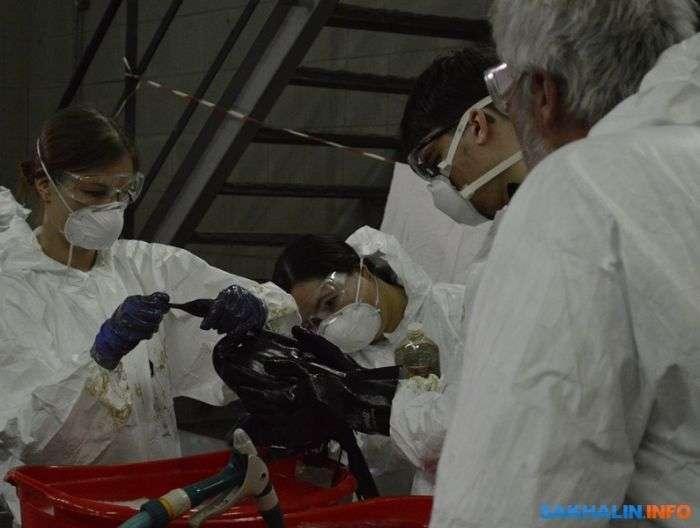 На Сахаліні нафтовики рятують бакланів, испачкавшихся в мазуті (6 фото)