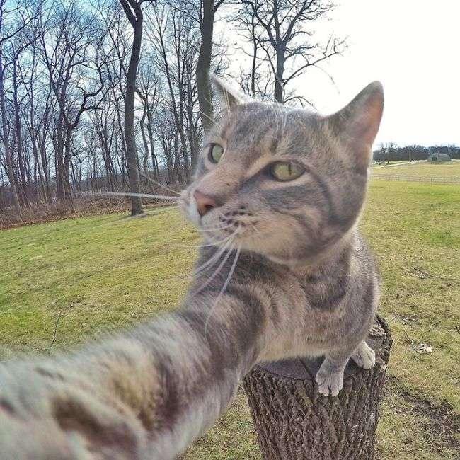 Менні - кіт, який знає толк в селфи (8 фото)