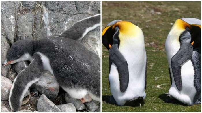 Як сплять різні тварини (10 фото)