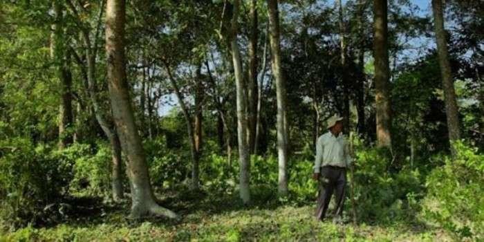 Житель Індії висадив ліс, який пізніше перетворився на заповідник (7 фото)