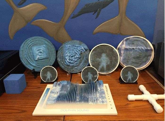 Вчені зрозуміли, яким «бачать» навколишній світ дельфіни (5 фото)