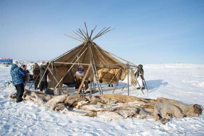 Яранга - традиційне житло чукотських оленярів (22 фото)