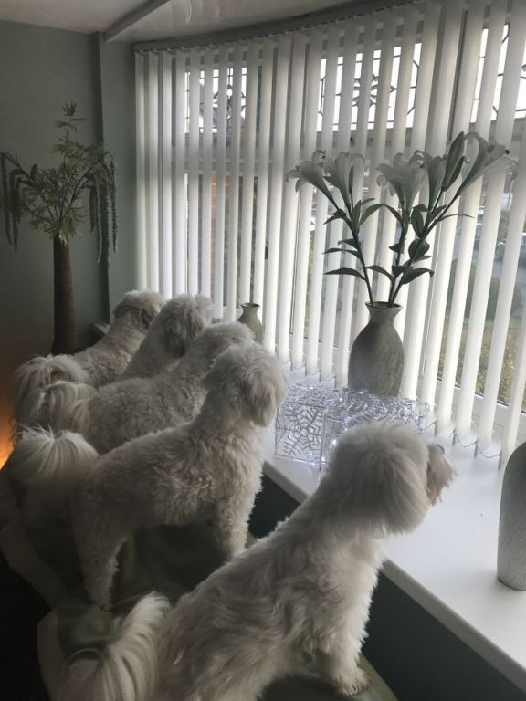 Четвероногое счастье: на что похожа жизнь, когда в доме больше двух собак зверушки,живность,питомцы,Животные