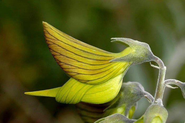 Пользователей форума удивило необычное растение   Интересное