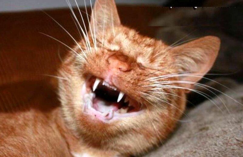 Как назвать кошку и насмешить всех вокруг?   Интересное