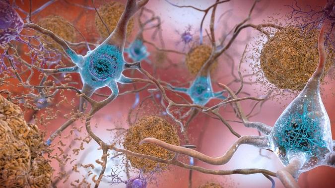 Оказалось, что мозг выращивает нейроны всю вашу жизнь! Вот что это значит для вас Интересное