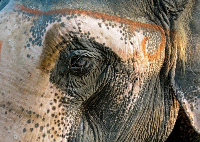 Животные с витилиго, которым как будто не хватило краски природа,факты,фауна