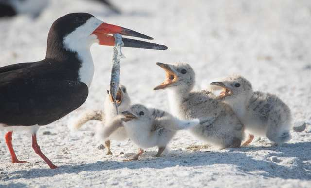 Птенец держал в клюве окурок: мама-птица поймала его вместо рыбы животные,природа