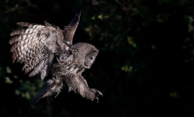 Найдите на фото сову: природный камуфляж в действии камуфляж,Природа,Пространство,птица,сова