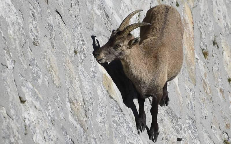 10 существ, которые обладают реальными суперспособностями животные,наука,Пространство,сверхспособности,суперспособности,факты