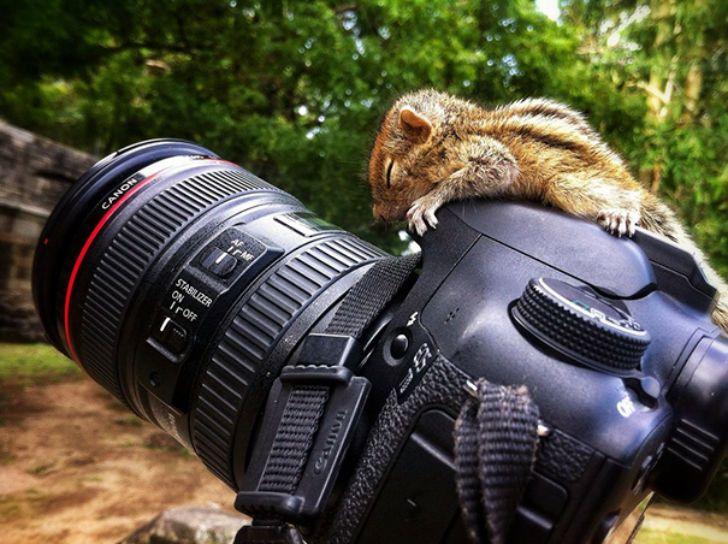 Милота дня! Фотографии животных, которые спят там, где захотят позитив,Смешные животные