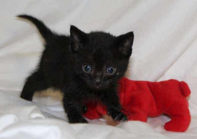 О тяжелой доле и счастливом спасении маленьких котят не всё так грустно