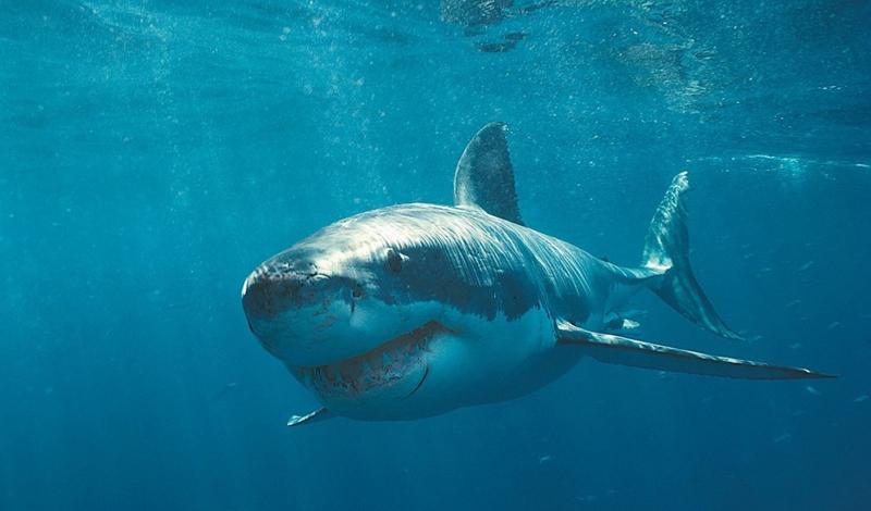 10 самых смертоносных животных в мире крупнейшие животные,опасные животные,Пространство,хищники