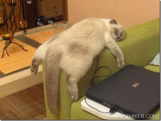 Крепкий сон – залог здоровья! животные,интересное,кошки и коты,юмор