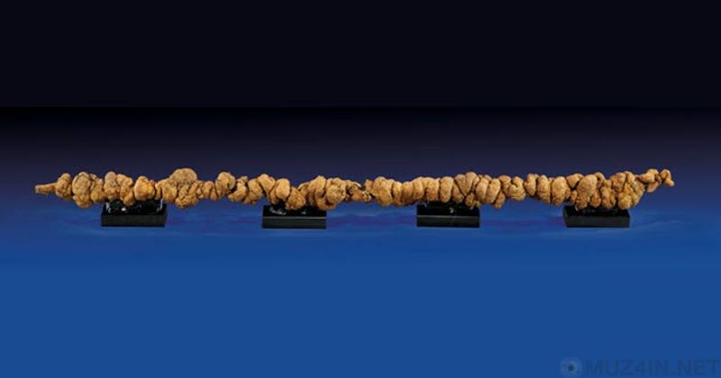 10 любопытных фактов, связанных с древними экскрементами Познавательное